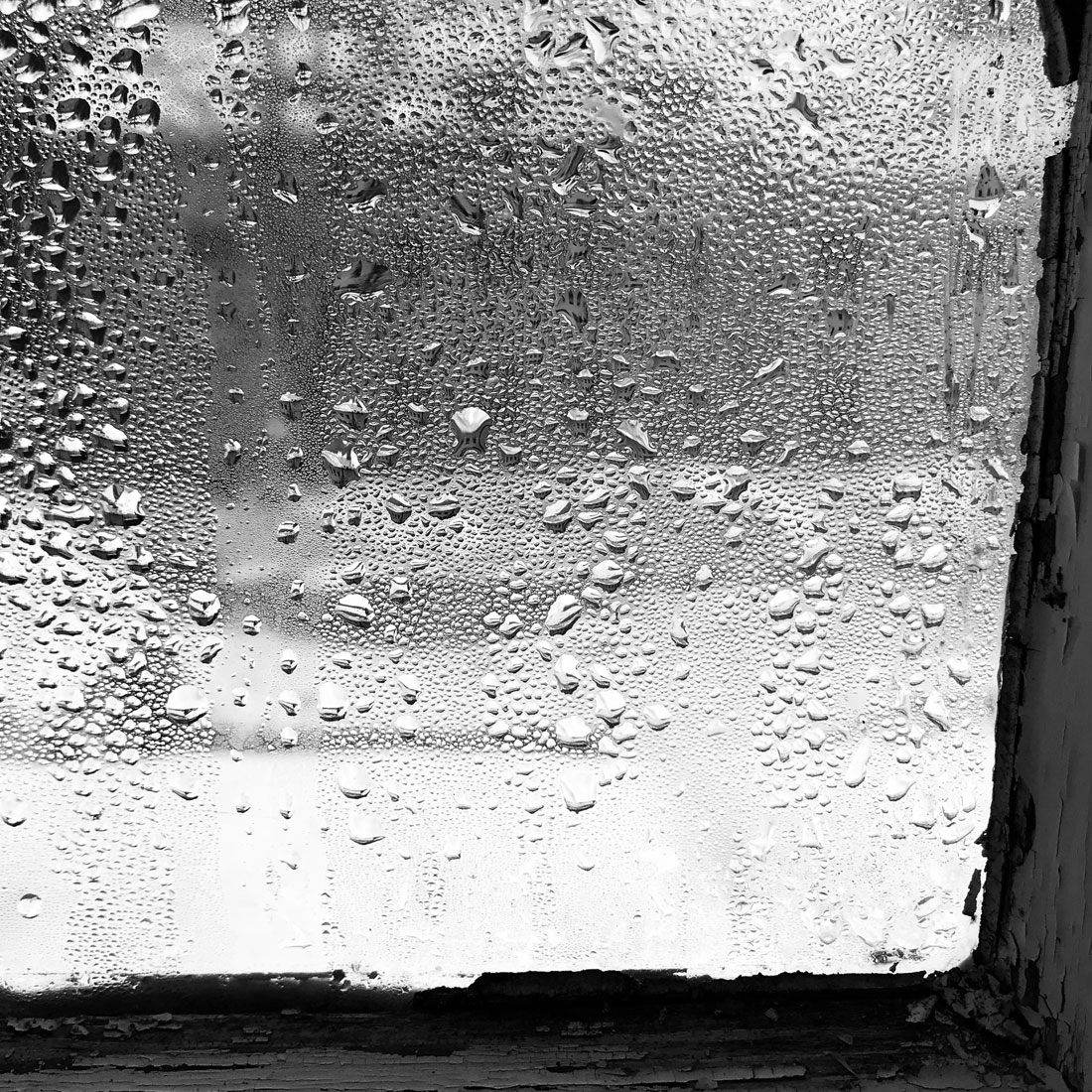 Susanna Ladda, 2019, Window